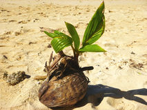 Sea with palm trees over tropical water at Muri lagoon, Rarotonga, Cook Islands. Royalty Free Stock Photos