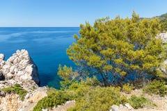 The sea on Palma de Mallorca. Palma de Mallorca, the sea against the background of wood and rocks. the sea on Palma de Mallorca Royalty Free Stock Image