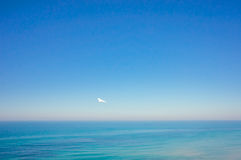 Sea panorama. With a seagull royalty free stock image