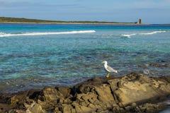 Sea paradise. Beuatifully looking beach La pelosa in sardegna with seagull stock images