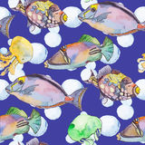 Sea pattern. Tropical fish. jellyfish. Ocean vector. Fashionable and quality pattern. Watercolor handmade painting Royalty Free Stock Images