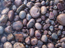 Sea pebble as background. Stock Image