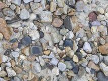 Sea pebble. Stock Image