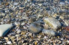 Sea pebble beach with multicoloured stones, waves with foam. Sea pebble beach with multicoloured stones, transparent waves with foam, on a warm summer day royalty free stock photos