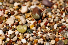Sea pebble Stock Image