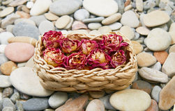 Sea pebble and roses Royalty Free Stock Images