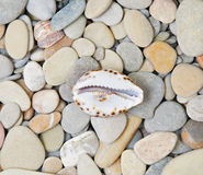 Sea pebble and shell Stock Images