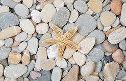 Sea pebble and starfishes Royalty Free Stock Photography