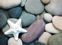 Sea pebble stones and starfish. As a natural background Stock Photography