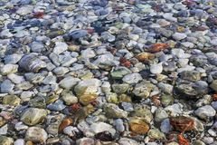 Sea pebbles Stock Photos