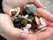 Sea pebbles in the hands. Sea pebbles and shells in the hands Royalty Free Stock Photos