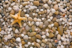 Sea pebbles and seashells background, natural seashore stones and starfish. Sea pebbles, seashells and starfish background. Natural seashore stones textured Stock Photo