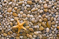 Sea pebbles and seashells background, natural seashore stones and starfish. Sea pebbles, seashells and starfish background. Natural seashore stones textured Royalty Free Stock Photos