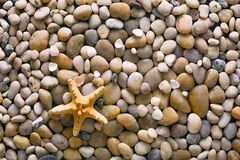 Sea pebbles and seashells background, natural seashore stones and starfish. Sea pebbles, seashells and starfish background. Natural seashore stones textured Royalty Free Stock Image
