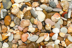 Sea pebbles and seashells Stock Image