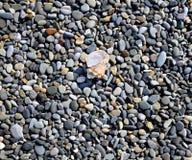 Sea pebbles on shore Stock Photography