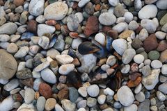 Sea pebbles white and black seashells background. Backdrop phone groundwork field ground stone rock gemstone boulder chunk Royalty Free Stock Image