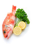 Sea perch. Cooking ingredient series sea perch. available for clipping work stock images