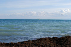 Sea-piece. Saved from water-plants and flying gulls above a sea Stock Photos