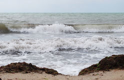 Sea-piece. Saved from water-plants and flying gulls above a sea Stock Photography