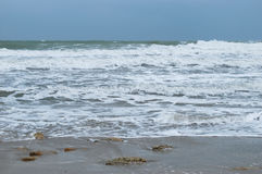 Sea-piece. Saved from water-plants and flying gulls above a sea Stock Images