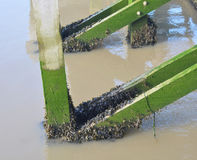 Sea pier Stock Images