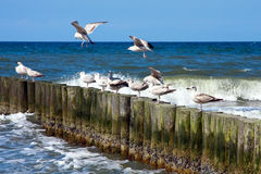 Sea piers and seaguls Stock Image