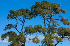 Sea Pines. Against a brilliant blue sky, Hilton Head Island, South Carolina stock images