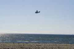 Sea Plane. Water plane flys over the shore getting ready for a landing Royalty Free Stock Images