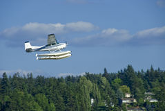Sea Plane Flyby. Sea plane flying over the trees off Lake Washington in Seattle Royalty Free Stock Image