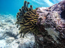 Sea plant Stock Photos