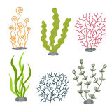 Sea plants and aquatic marine algae. Seaweed set vector illustration. On white stock illustration