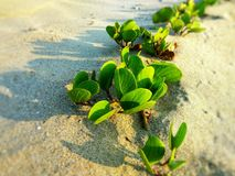 Sea Plants Stock Images