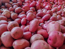Sea of Potatoes Farmers Market. Hundreds of red skinned potatoes at Farmers Market ready for purchasing stock photo