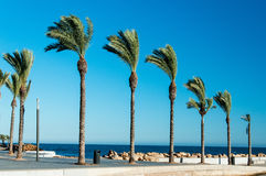 Sea promenade flanked by palms in Spain Royalty Free Stock Photos