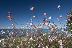 Sea and Qualicum Beach. Parksville and Qualicum Beach with flowers Royalty Free Stock Photo