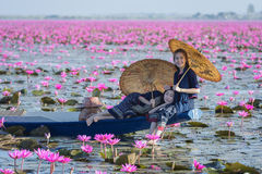 Sea of red lotus Stock Images