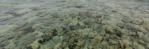 Sea reef Stock Image