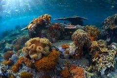 Sea Reef Stock Photos