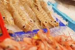 Sea reptiles on the counter in the fish market in Europe.  Royalty Free Stock Photography