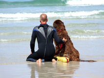Sea Rescue Dog royalty free stock photos