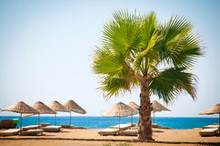 Sea resort, scenic sandy beach with palm trees. 