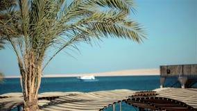 Sea resort travel beach, sand, palm tree. Bright stock footage