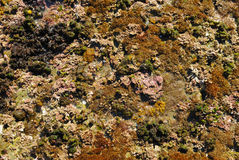 Sea rock Stock Photo