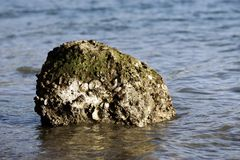 Sea Rock Royalty Free Stock Photography