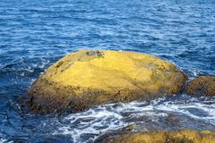 Sea rock covered with yellow algae Royalty Free Stock Photography