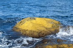 Sea rock covered with yellow algae Royalty Free Stock Photo