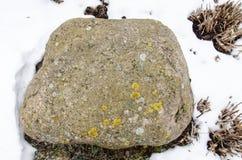 Sea rock. Ocean rock. Beach rock. Nature rock. Moss grow on rock. Big rock. Lichen on rock. Rock on beach. Green rock Stock Photography