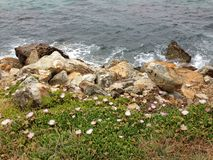Sea-rock-plants coexist together Royalty Free Stock Images
