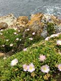 Sea-rock-plants coexist together. When sea, rock, and plants coexist Royalty Free Stock Images